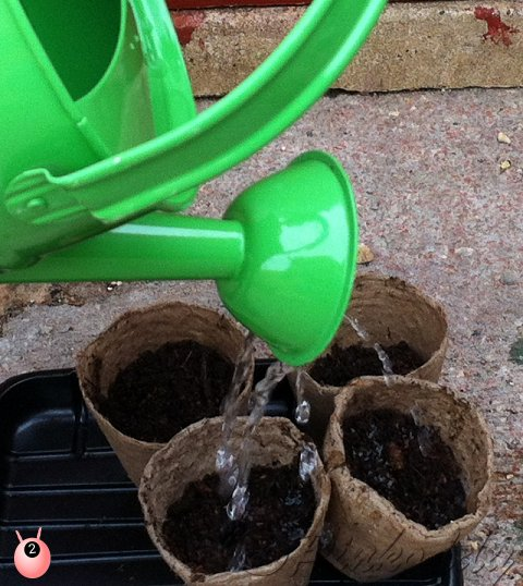 The Science Experiment – Germination #KidsGrowWild challenge