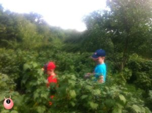 boys_berry_picking