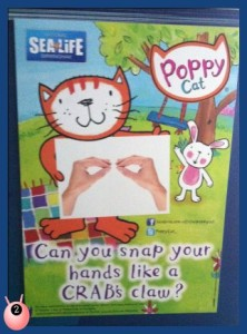 Copy Poppy Cat at Birmingham Sea Life Centre be a Crab