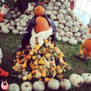 Snow White pumpkin