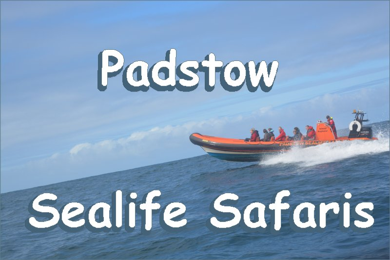 Padstow Sealife Safaris Review