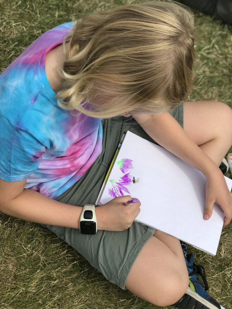 observational drawing in lavender field