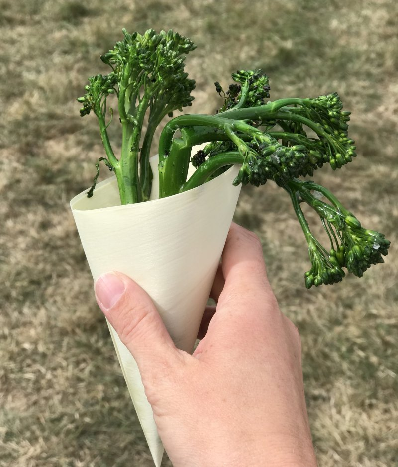 cross between broccoli and chinese kale