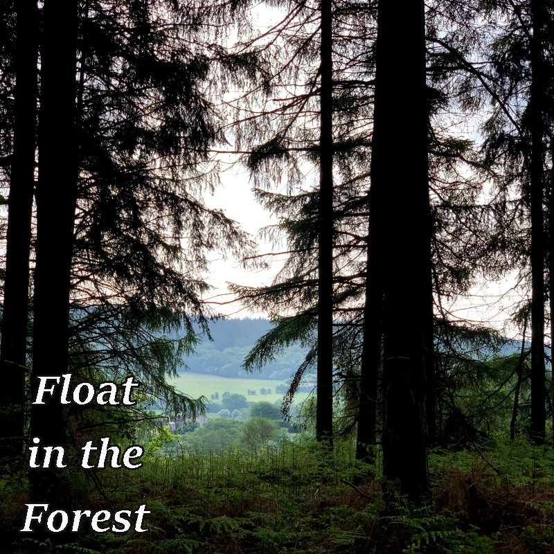 Float in the Forest trees at the Forest of Dean